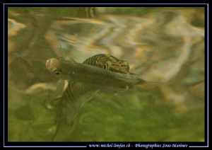 Hungry Pike Fish... :O)... by Michel Lonfat 